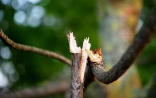 3 способа помочь дереву, потерявшему ветку