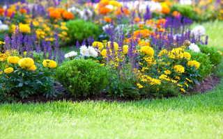 Цветоводство на даче: выращивание тюльпанов, нарциссов, безвременников