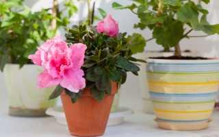 Яркие звездочки на вашем окне. Цветущие зимой комнатные растения