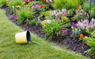16 прекрасных растений, способных украсить бедную почву