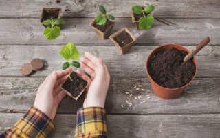 Распространенные ошибки дачников при посеве семян на рассаду
