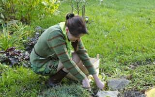 Сорняки на садовых дорожках: почему растет трава и как с ней бороться