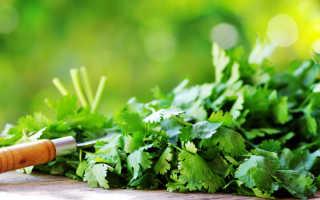 Симфония ароматов. 7 пряных трав, приспособленных к выращиванию в средней полосе