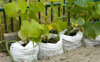 Как выращивать овощи в вертикальных грядках из мешков