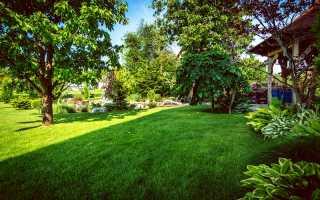 12 главных ошибок при обрезке деревьев и кустов