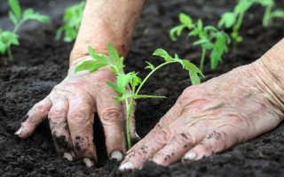 Выращивание помидорной рассады. Рекомендации опытных дачников