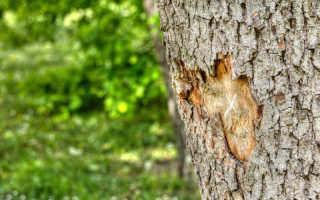 Как вылечить поврежденное газонокосилкой дерево