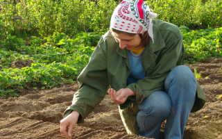 Когда начинать сеять семена — учитываем разные факторы и соблюдаем правила