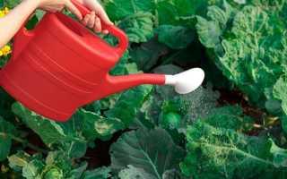 Поливаем овощи правильно