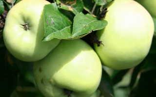 Основные правила посадки плодовых деревьев осенью