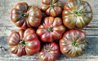 Томат Фиолетовая тыква: описание сорта и особенности выращивания