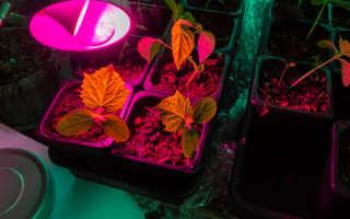 Огурцы на подоконнике зимой — советы для овощеводов