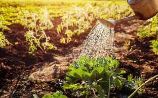 Что посадить после капусты на следующий год
