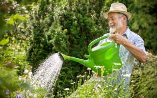 Что обязательно нужно сделать осенью на садовом участке