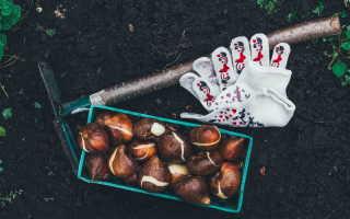 Просто и эффективно: 6 этапов выгонки тюльпанов к весенним торжествам