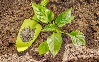 Мочевина – лучшее азотсодержащее удобрение для перцев