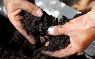 Обогащение почвы и защита растений от болезней. Биопрепараты из микроскопических грибов