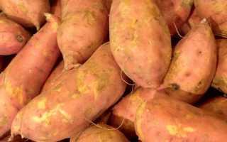 Сладкий картофель (батат). Все о культуре, советы по выращиванию