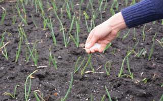Удобрение для лука, умножающее объем урожая