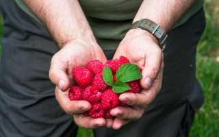 Выращивание малины на бревнах: технология посадки и уход