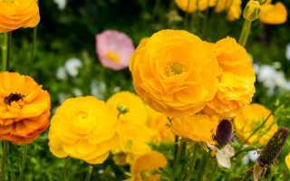Растения, живущие на камнях и цветущие с весны до осени