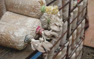 Выращиваем вешенки на дачном участке