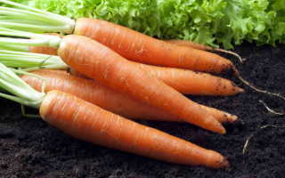 Основные ошибки на морковной грядке