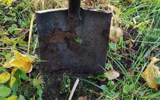 Копать или не копать огород осенью — мой ответ «да». Рассказываю почему и как я это делаю