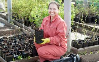Сажать плодовые деревья осенью надо правильно! Как я это делаю, каких правил придерживаюсь для отличного результата