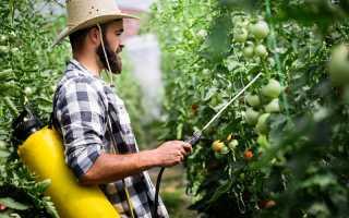 Пищевая сода для подкормки и опрыскивания томатов