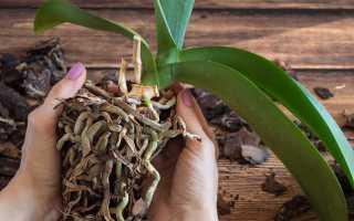 Подручные средства для корнеобразования растений