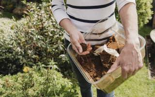 Кофейная гуща на огороде: семь вариантов использования