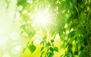 Что угрожает лиственным деревьям: болезни и вредители