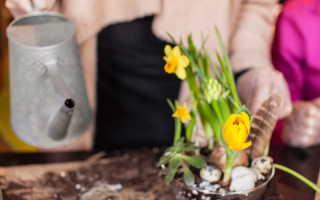 Десятка бюджетных садово-огородных хитростей от опытных дачников