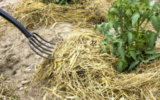 Мульчирование почвы соломой