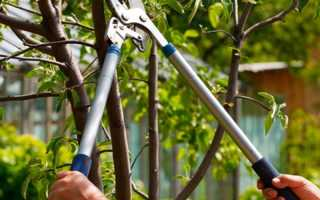 Летняя обрезка плодовых деревьев — 5 несложных результативных способов