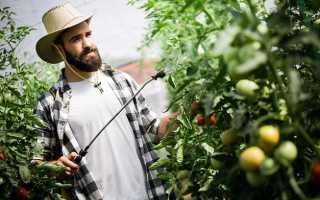 Делаем состав на основе дрожжей: огурцы и помидоры не болеют