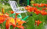 Осень — лучшее время для посадки лилий