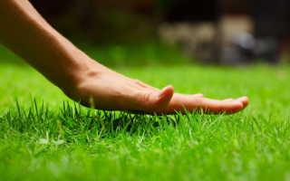 Подкармливаем газонную траву правильно: составы для весны, лета и осени