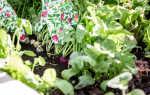 Июнь для дачного сезона: какие культуры можно посадить