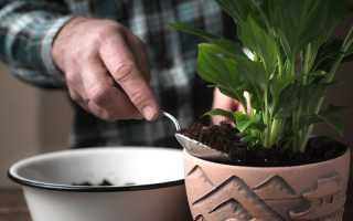 Зеленые магниты для любви: растения, которые по приметам помогут наладить личную жизнь