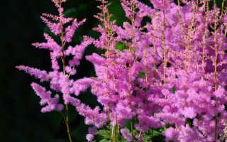 Многолетние теневыносливые цветы для сада, или Как организовать «теневую» сторону