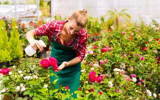 Основные правила укрытия розы на зиму