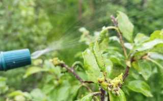 Чем я обрабатываю плодово-ягодные растения осенью от болезней и вредителей, чтобы получить отличный урожай в новом сезоне