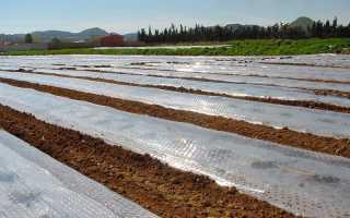 Соляризация почвы